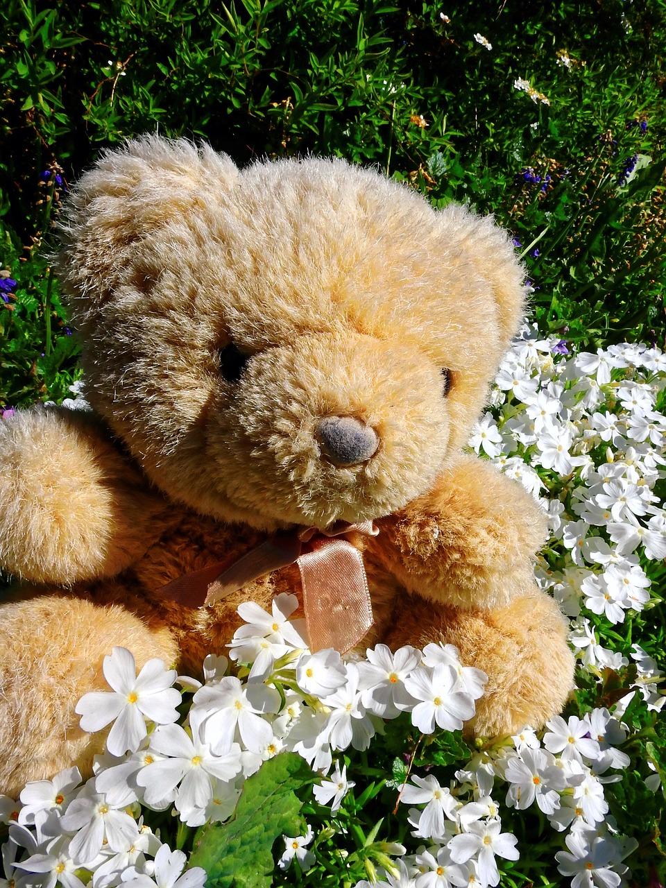 teddy-bear-1374893_1280